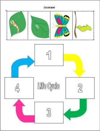 Classroom Freebies: Caterpillar to Butterfly Life Cycle Cut and Paste!